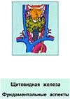 Щитовидная железа. Фундаментальные аспекты